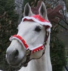 frohe weihnachten an alle foto bild tiere haustiere