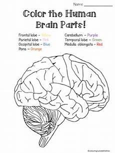 brain parts cut paste and color the parts worksheet tpt