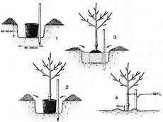Obstbäume Pflanzen Wann - ogv obst und gartenkultur vorarlberg