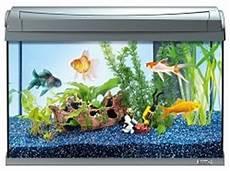 tetra 199347 aquaart goldfish aquarium komplett set 60