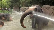 am zoo greenest zoo in america cincinnati zoo