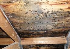 What Does Mold Grow On Canada S Restoration Services