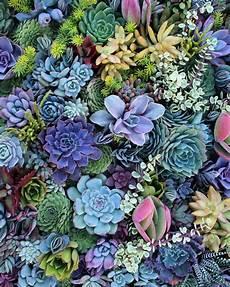 cactus flower iphone wallpaper best 25 succulents wallpaper ideas on