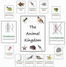 animal kingdom worksheets for kindergarten 14201 free animal kingdom notebook printables free homeschool deals