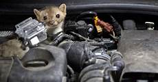 Marder Im Auto - how to protect car from rats simple diy ways news bugz