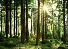 Wald Zu Kaufen Gesucht Im Odenwald Oder Kraichgau