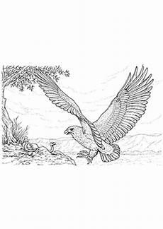 Ausmalbilder Zum Drucken Adler Ausmalbilder Adler Und Schlange Adler Malvorlagen