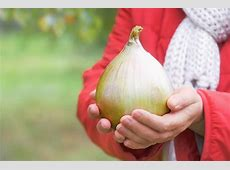 How to Grow Big Onions » Proven Tips