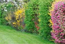 Haie Mixte Ch 234 Tre Outdoor Home Ideas Id 233 Es Jardin