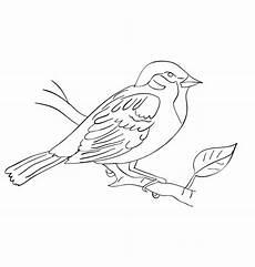 Malvorlage Vogel Spatz Spatzen Malvorlage Kostenlos Coloring And Malvorlagan