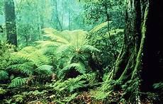 Hutan Tropis Sumber Ilmu