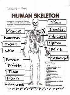human skeleton worksheet mckenna mrs home page