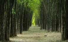 Taman Ala Jepang Di Hutan Bambu Surabaya Khas