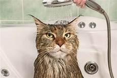 come fare un bagno come fare il bagno a un gatto non sprecare