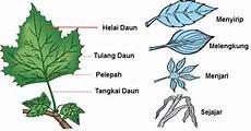 Bagian Tumbuhan Dan Fungsinya Mathemathika