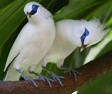Belajar Dari Kasus Teguh Pemilik Burung Langka Harus
