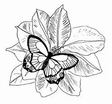 Malvorlage Schmetterling Blume Butterfly Coloring Pages