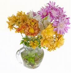 tutti i fiori fiori per tutti i ognissanti wineflowers