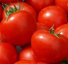 Wie Gesund Sind Tomaten - wie gesund sind tomaten proplanta de