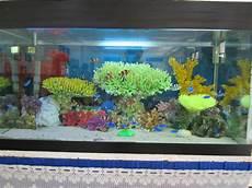 Teknologi Budidaya Ikan Hias Laut Cara Memelihara Ikan