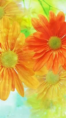 Orange Flowers Iphone Wallpaper by Orange Yellow Flowers Iphone Wallpaper Color