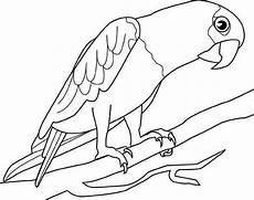 big parrot coloring page print