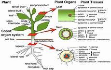 Gambar Bagian Organ Pada Tumbuhan Brainly Co Id