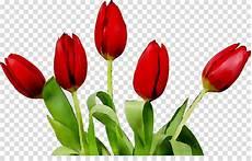 900 Gambar Bunga Tulip Kartun Hd Paling Baru Gambar Id