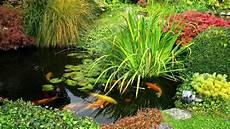 plantes aquatiques pour bassin de jardin c 244 t 233 maison