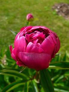 Notre Jardin Secret Des Fleurs En Pagaille