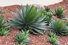 kaktus vektoren fotos und psd dateien kostenloser