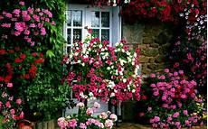 Free Desktop Wallpaper Flower Garden by Flower Garden Desktop Wallpapers Top Free Flower Garden