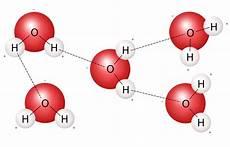 hydrogen bond diagram the strong polar bond between water molecules creates water cohesion