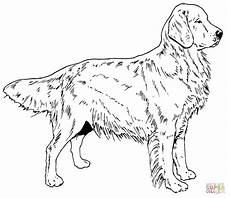labrador coloring page at getcolorings free