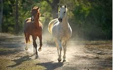 hd pferde hintergrundbilder hd hintergrundbilder
