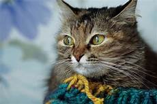 Ab Wann Frieren Katzen 6 Tipps Zum Erkennen W 228 Rmen