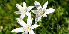 fiori d bach fiori di bach riza it