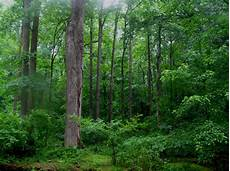 Lindungi Hutan Indonesia Hutan Indonesia