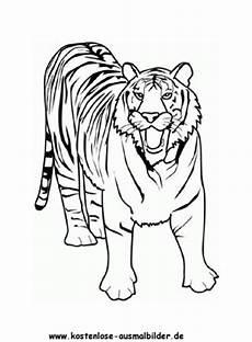 ausmalbilder tiger 7 tiere zum ausmalen malvorlagen tiger