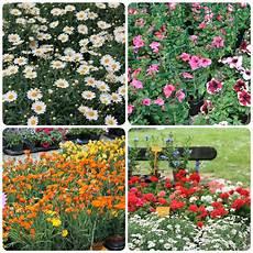fiera dei fiori la fiera dei fiori alessia lattementa