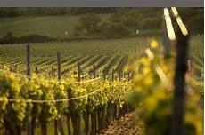 Weinprobe Weingut Markus Schwaab Kirrweiler Pfalz