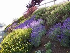 Steile Böschung Bepflanzen - drought tolerant deer resistant hillside garden