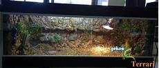 vasche x tartarughe d acqua costruire un terrario per tartarughe