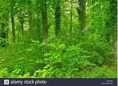 Wald Im Fr 252 Hling Natur Naturschutzgebiet Taubergiessen