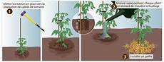 planter des tomates en pot 45833 comment planter des tomates