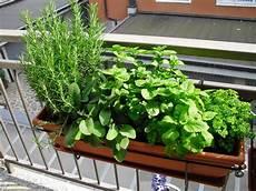 menta in vaso creativa per gioco e per passione i miei balconi fioriti
