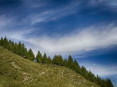 Malvorlagen Landschaften Gratis Hack Trees On Mountain In Carinthia Austria Think