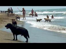 mit hund pudelwohl strand nur f 252 r hunde in italien