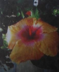 estado bolivar simbolos naturales proyecto municipio bol 237 var 5 simbolos naturales
