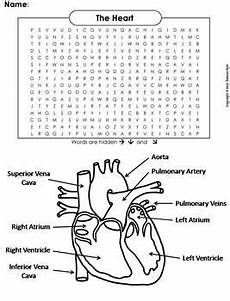 circulatory system worksheet human systems word search the heart and circulatory system worksheet